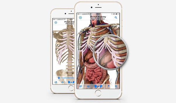 3D Human Physiology iOS App \'Pocket Anatomy\' Goes Free For Limited ...